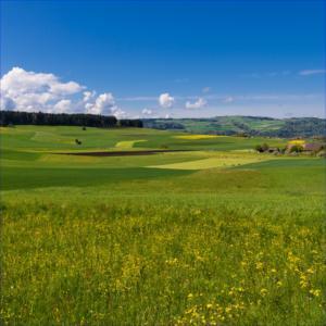 EKL: Stickstoffbelastung von natürlichen Lebensräumen weiterhin zu hoch